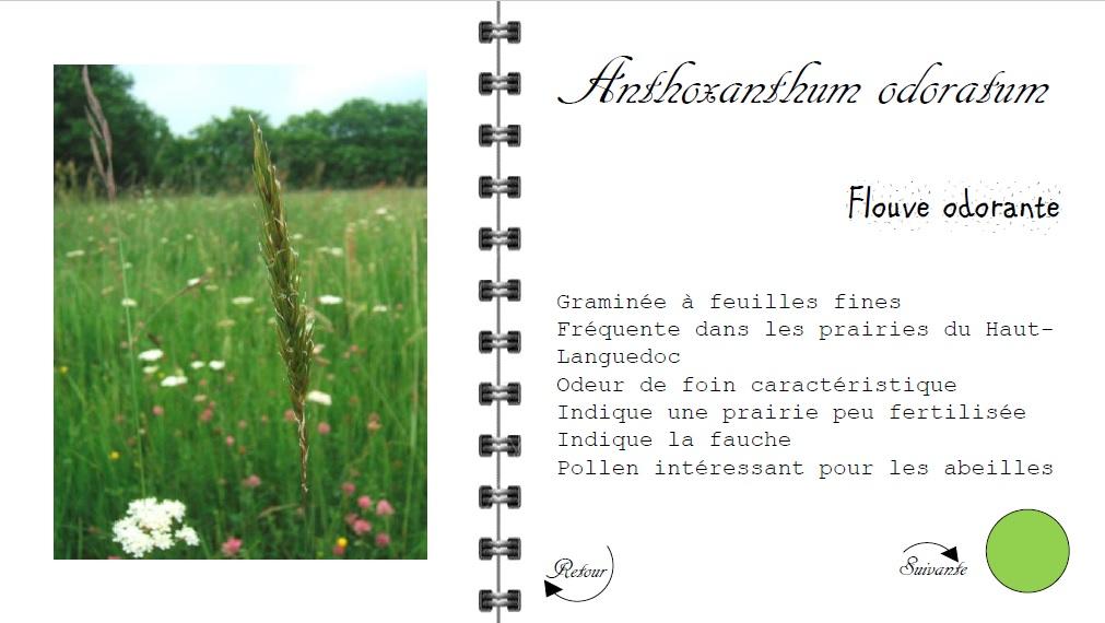 Guide Plantes Prairies Haut Languedoc