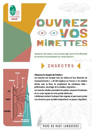 Fiche Ouvrez vos mirettes - Insectes du Parc naturel régional du Haut-Languedoc