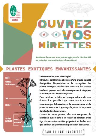 Fiche Ouvrez vos mirettes - Plantes envahissantes du Parc naturel régional du Haut-Languedoc