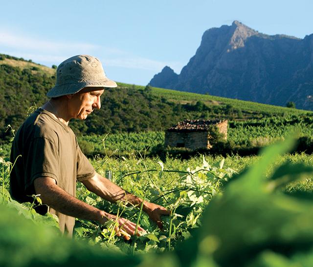 Vigneron dans la vigne dans le Parc naturel régional du Haut-Languedoc