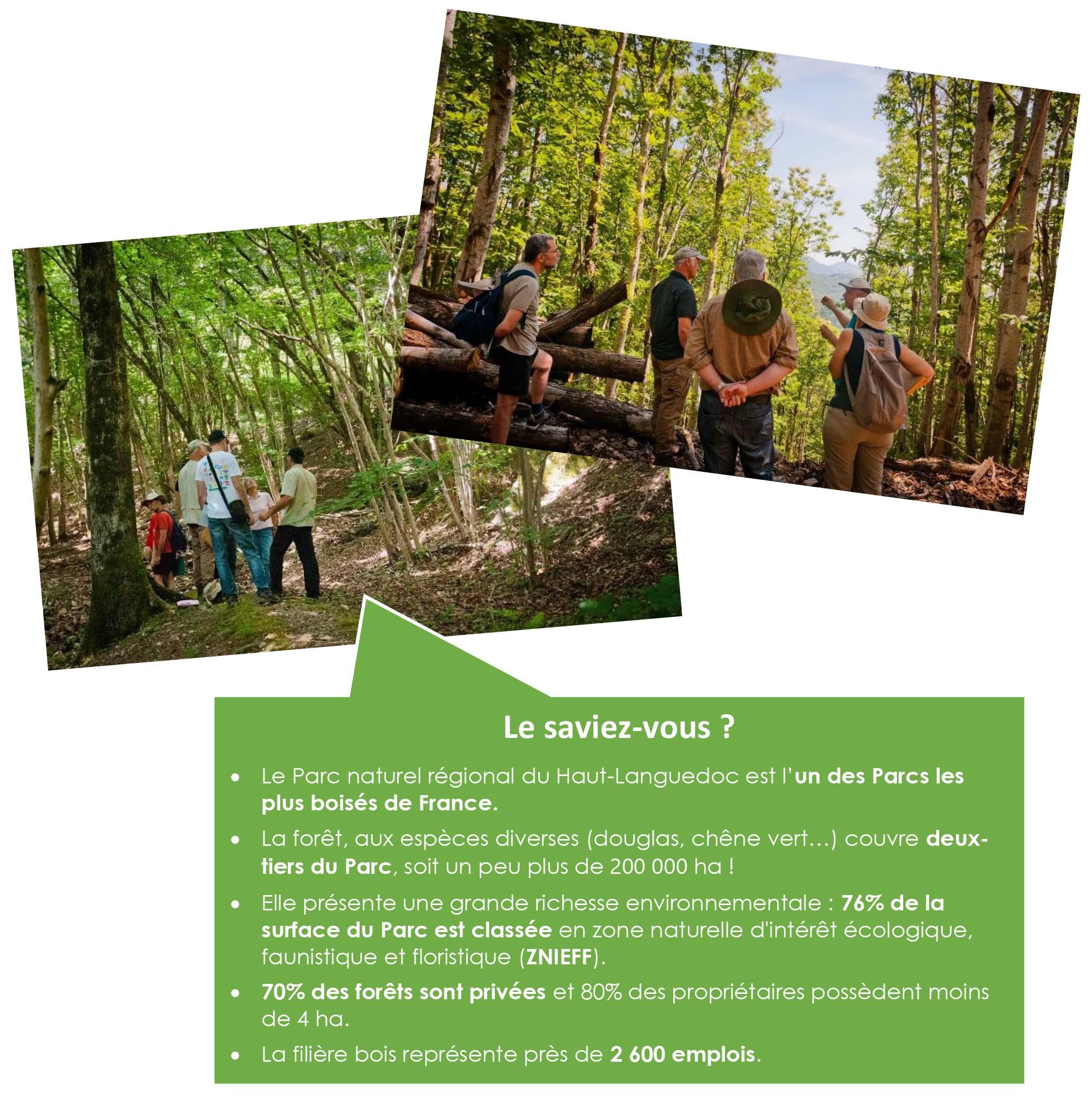 Forêt de Hêtres_de_Périchotte