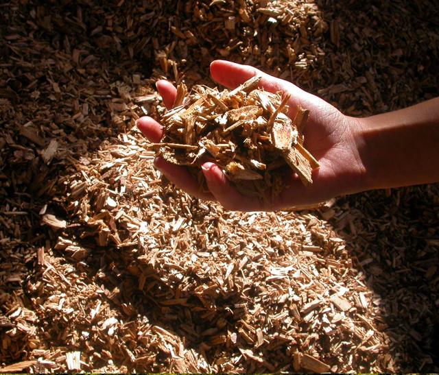 Main tenant des copeaux de bois pour le chauffage dans le Pnr Haut-Languedoc