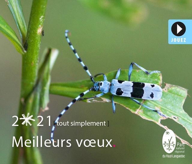 Meilleurs Voeux pour l'année 2021 de toute l'équipe du Parc naturel régional du Haut-Languedoc