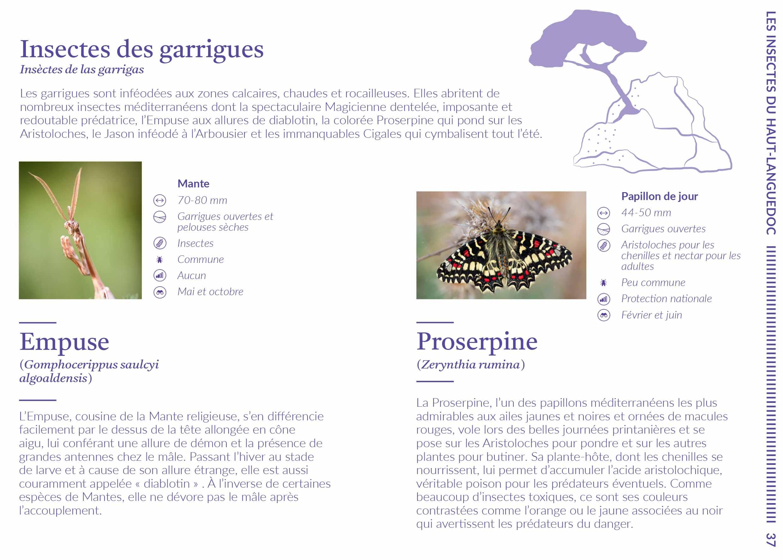 20201214 HL Hirondelle des rochers c P.MaigreLPO34