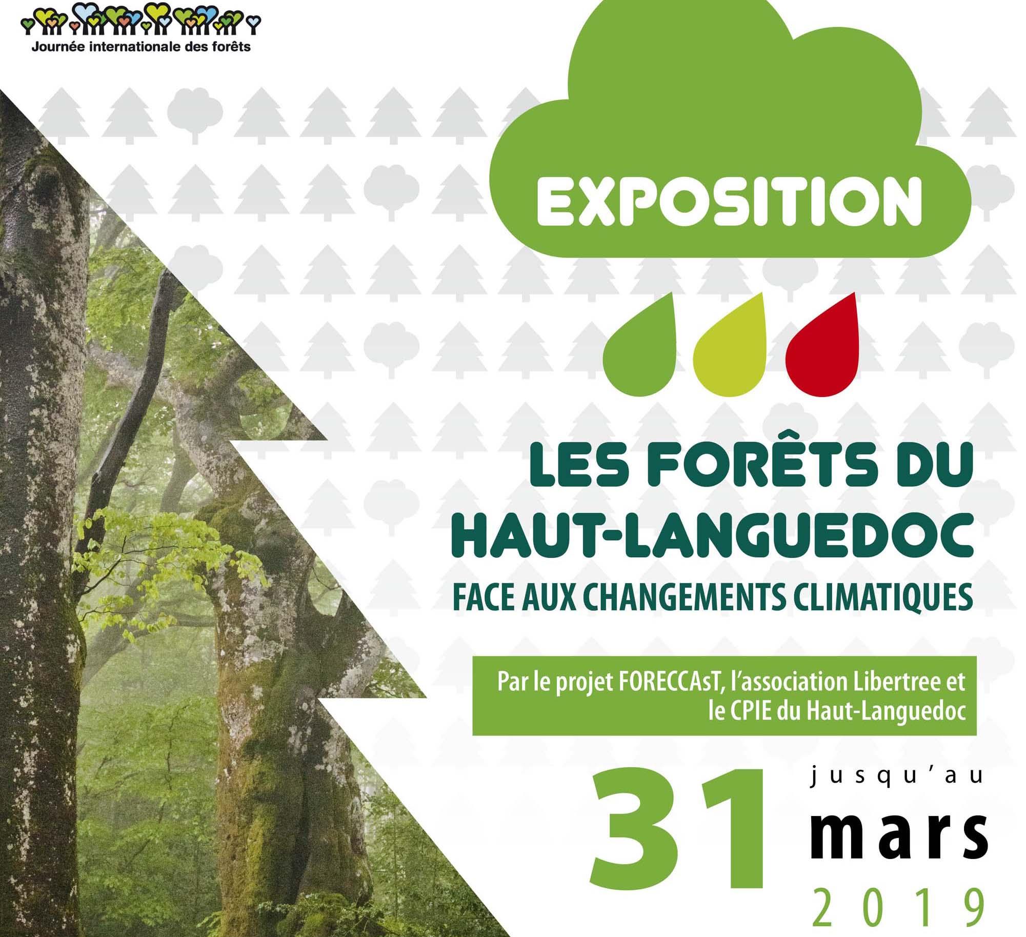 Vignette de l'Exposition Journée internationale des Forêts dans le Pnr Haut-Languedoc de l'Exposition Journée internationale des Forêts dans le Pnr Haut-Languedoc