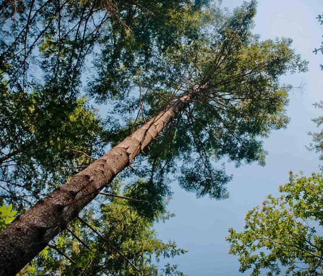 """Vignette du Symposium """"Adaptation des forêts aux changements climatiques"""" du projet LIFE FORECCAsT, organisé par le pnr Haut-Languedoc"""